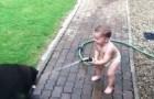 Perros labrador y bebè juegan al carnaval!