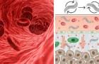 Minirobots die medicijnen naar kankercellen sturen: de testresultaten zijn bemoedigend