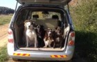 I 5 cani più pazienti che abbiate mai visto prima