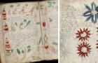 """Onderzoekers geloven dat ze het meest mysterieuze manuscript ter wereld hebben """"gekraakt"""": hier gaat het om"""