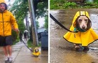 18 adorabili foto che mostrano fino a che punto può spingersi l'amore di un uomo per il suo animale domestico