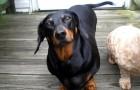 Video Hundevideos Hunde