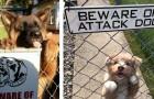 20 esilaranti immagini di cani