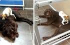 Sinds ze in het asiel zijn achtergelaten, zijn deze twee honden nooit gestopt met elkaar te knuffelen