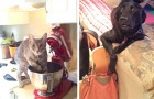 27 pets that did not expect their owners to come back home early ... and were caught red-handed!