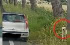 Un povero cane viene abbandonano sul ciglio della strada, ma qualcuno lo fotografa: parte la caccia all'uomo