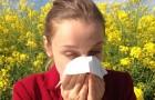 Saisonale Allergien werden durch den Kohlendioxidgehalt in der Atmosphäre immer aggressiver