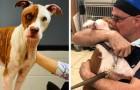 Um cachorro que escapou de um incêndio encontra o veterinário que salvou a sua vida: o abraço vai te emocionar