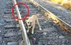 Questo cane è stato abbandonato su un binario ferroviario, ma un uomo arriva al momento giusto e lo salva
