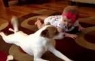 Le chien, le bébé et la leçon pour marcher à 4 pattes