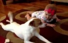Cachorro ensina menina a engatinhar
