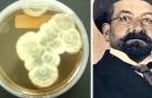 De eerste die penicilline ontdekte, was niet Fleming, maar een Italiaanse arts wiens naam vrijwel niemand kent