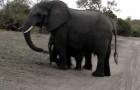 Il tenerissimo elefantino che si spaventa da solo