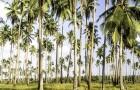 Nelle Filippine una nuova legge impone agli studenti di piantare 10 alberi per potersi laureare