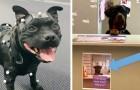 15 honden met een echte baan, en waarschijnlijk doen ze het beter dan jij