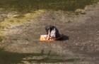 Um filhote 'especial' é jogado e abandonado em um canal, mas depois de alguns dias, começa uma nova vida