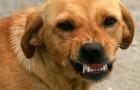 Din hund kan känna av negativa personer och försöker att skydda dig från dem enligt en vetenskaplig undersökning