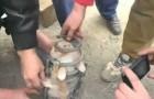 Para salvar el pobre gato se necesitaba un buen trabajo en equipo.
