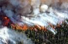 Klimaatverandering zou de menselijke beschaving in 2050 kunnen doen instorten, beweert een nieuw rapport