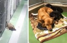 A dog escapes from its enclosure during the night to console two orphaned puppies that were crying ...