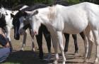 Un famoso cantante ha salvato 70 cavalli dal macello e li ha liberati nella sua proprietà