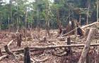 Brasile, deforestazione fuori controllo: distrutti 739 kmq di foresta amazzonica nel solo mese di maggio 2019