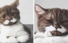 Det här är Gringo, katten med mustach som alla förälskar sig i