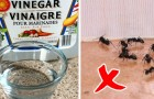 Vinegar is an effective and very economical helper! Here are seven ways to use it in household cleaning