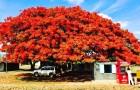 15 prachtige bomen van over de hele wereld die je in je tuin wilt planten