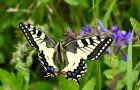 Il 40% degli insetti potrebbe sparire entro qualche decennio, e le conseguenze per il pianeta sarebbero nefaste