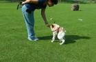 Il cane che sta sensibilizzando il mondo a causa della sua sfortunata natura