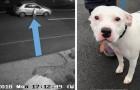 Le chien est abandonné dans la rue, mais la vidéo de surveillance coince le maître