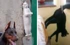 16 van de meest roekeloze katten ter wereld die ook je meest trieste dag opfleuren