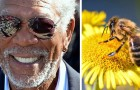Morgan Freeman a transformé son gigantesque ranch en sanctuaire pour les abeilles