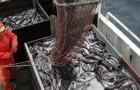 Bis 2048 könnten Meere und Ozeane völlig frei von Fischen sein