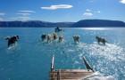 Groenland heeft op één dag 2 miljard ton ijs verloren: honden