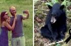 Ein Bär, dem Touristen Nahrung für ein Selfie gaben, wurde von den Behörden abgeschossen, weil er zu sehr an den Menschen gewöhnt war