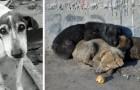 L'Olanda è diventata il primo paese senza cani randagi per le strade: ecco come ci sono riusciti