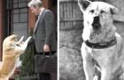 Die wahre Geschichte von Hachiko, dem Hund, der mit seiner Liebe und Hingabe die Welt bewegt hat