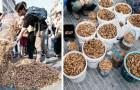 Questi giovani volontari hanno raccolto mozziconi di sigaretta per 3 ore di fila: il risultato è spaventoso