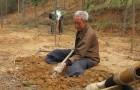 Cet homme handicapé de 70 ans plante des arbres tous les matins depuis 20 ans : aujourd'hui, il a une forêt luxuriante autour de lui