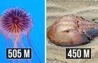 Oud maar goud: hier zijn enkele van de oudste wezens die vandaag op aarde leven