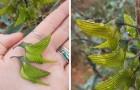 Die Blütenblätter dieser Blume ähneln Kolibris