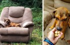 This puppy was abandoned in his favorite chair and sat there waiting for his owner