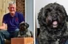 Berättelsen om Ted, hunden som väckte sin husse från konstgjord koma