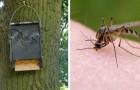 Per allontanare definitivamente il fastidio delle zanzare, adottate un pipistrello!
