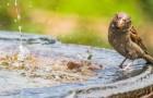 Gli uccelli faticano a trovare acqua fresca durante l'estate: ecco cosa puoi fare per salvargli la vita