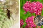 Les moustiques ne vous laissent aucune trêve ? En cultivant ces plantes, vous aurez un allié inattendu