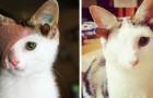 Finalmente este gatinho com 4 orelhas e um olho conseguiu encontrar uma família que o enche de amor