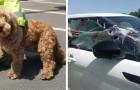 Feuerwehrleute retten das Leben eines Hundes, der im Auto in der sengenden Sonne zurückgelassen wurde
